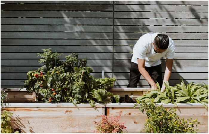 Grow Food - Intelligent Remodeling Ideas For Your New Garden