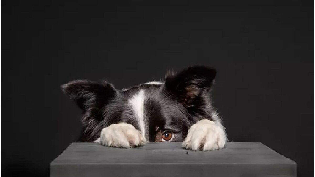 Dogs and Fireworks Anxiety: How To Deal With It